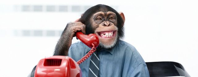 monkey-customer-service.jpg